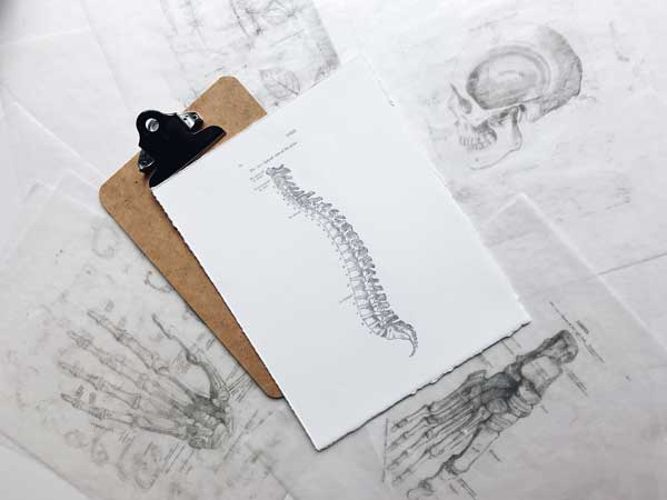 spine theory